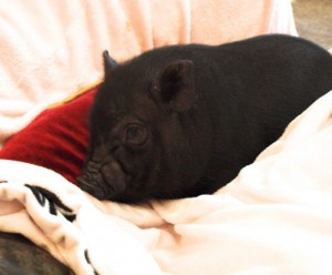 happiness is a piggy bed